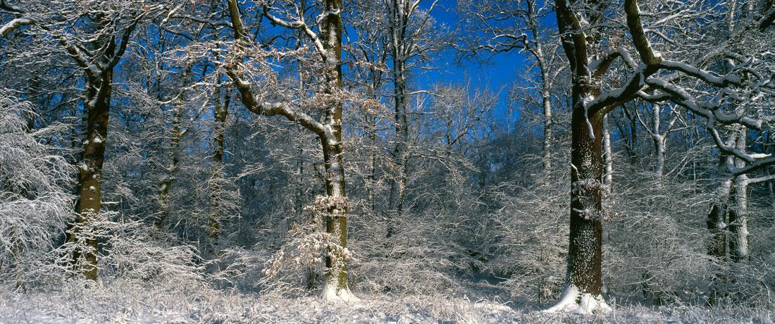03-darvert-schnee-eichen-fit-fuer-den-klimawandel