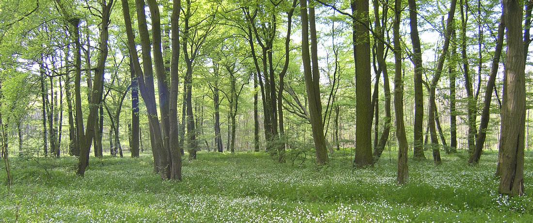 04-eichen-hainbuchenwald-fit-fuer-den-klimawandel
