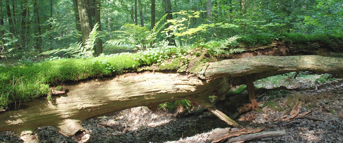 07-lebendiges-totholz-fit-fuer-den-klimawandel