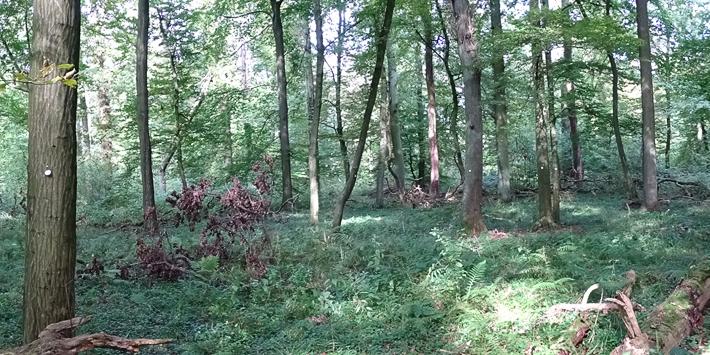 wolbecker-tiergarten-fit-fuer-den-klimawandel