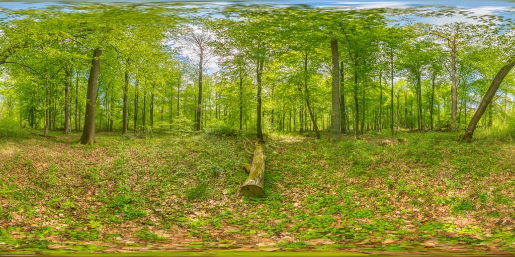 WT1c_DSC9470-HDR Panorama