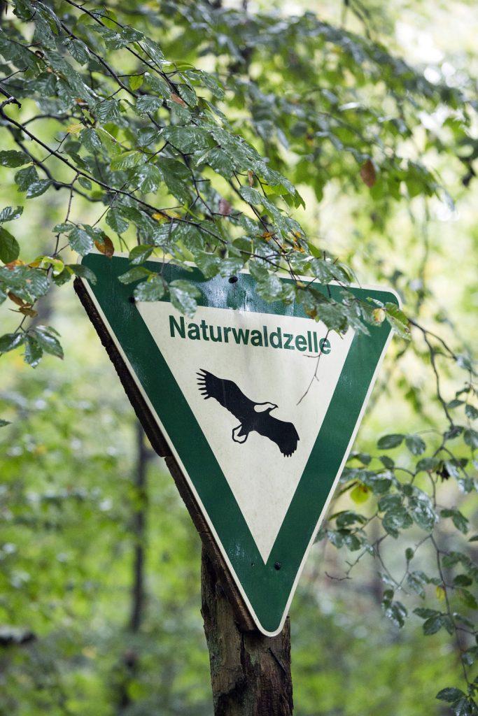Naturwaldzelle Teppes Viertel